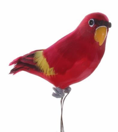 Parrot red yellow - Shishi