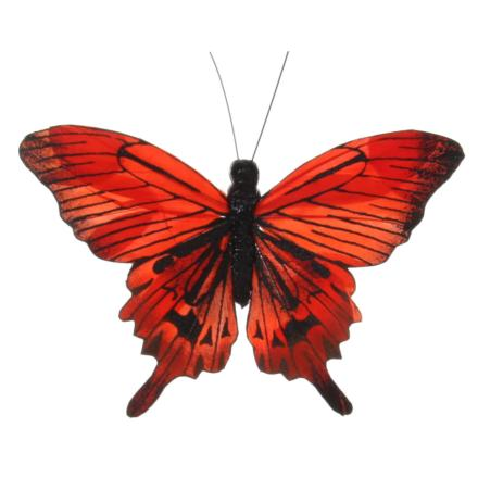 Butterfly orange - Shishi
